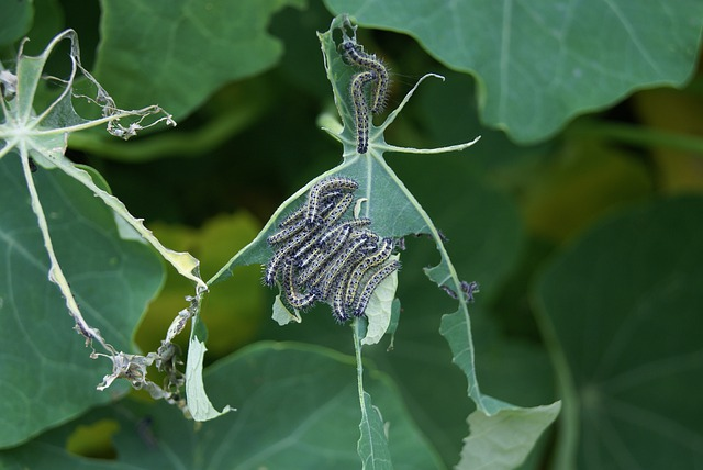 image of insects eating plant